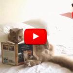 Video di gatti divertenti e pazzi - Prova a non ridere!
