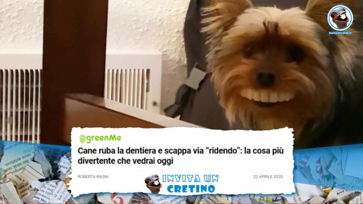 cane ruba dentiera scappa ridendo