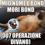 Mori Bond, il cane divertente che dorme sul divano senza pudore