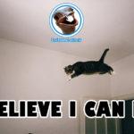 Breve storia triste: Gatto motivato crede di saper volare