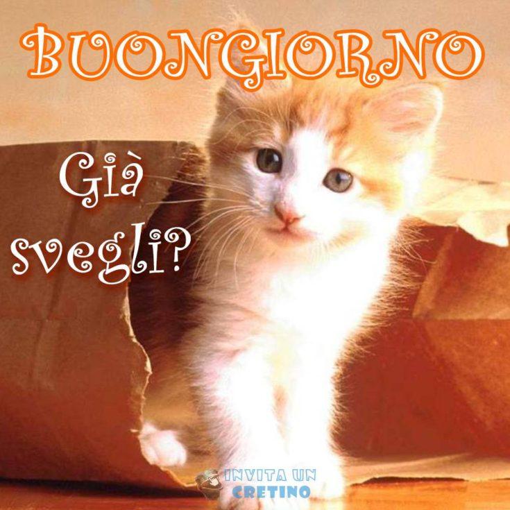 buongiorno svegli gattino immagine da scaricare