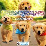 Buongiorno Cucciolotti, immagine di cani dolcissimi