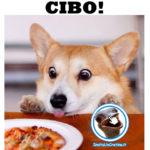 Cane fa un'espressione divertente davanti al cibo