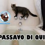Gatto Impiccione nella Vasca da bagno