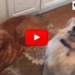Video di cani divertenti e pazzi che giocano