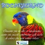 Buongiorno con frase significativa, immagine pappagallo