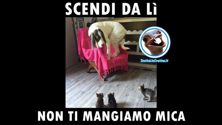foto divertenti gattini cane scendi non ti mangiamo