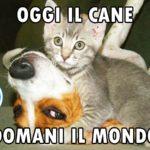 Foto gatti e cani divertenti Oggi il cane, domani il mondo