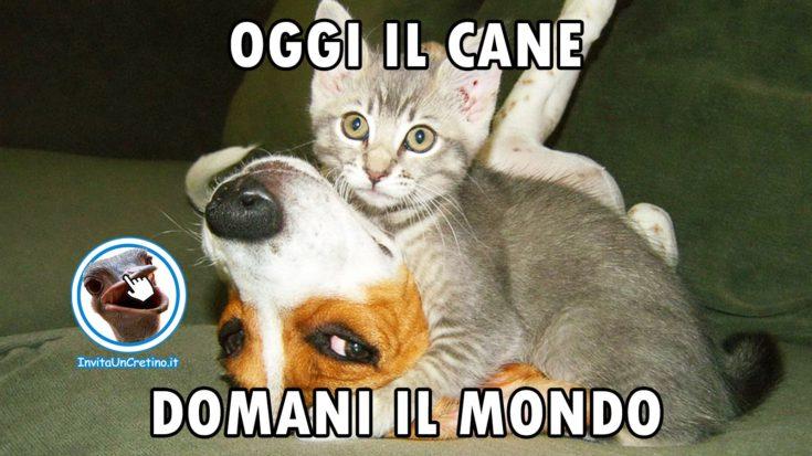 foto gatti e cani divertenti oggi il cane domani il mondo