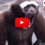 Video ANIMALI divertentissimi e teneri che fanno ridere