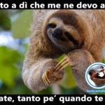 Questo bradipo va di fretta - Foto divertenti