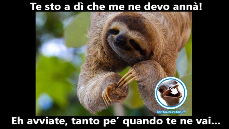 foto divertenti bradipo va di fretta