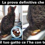 Gatto dispettoso si siede sul panino - Foto divertenti