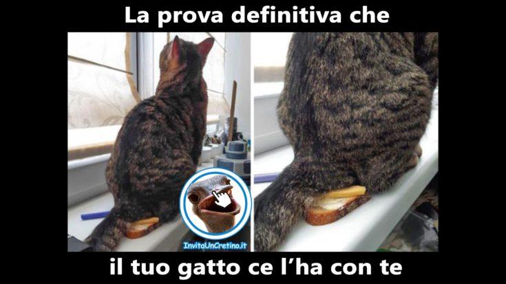 foto divertenti gatto dispettoso