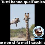Anche le giraffe hanno un amico impiccione - Foto divertenti