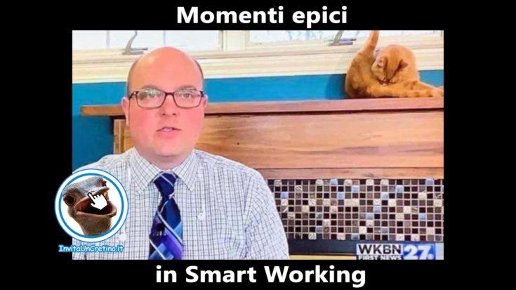 foto divertenti smart working momenti epici gatto giornalista
