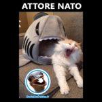 Attore nato, c'è un gatto in bocca allo squalo - Foto divertenti