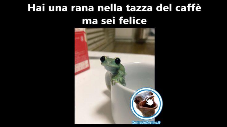 rana nella tazza del caffe felice foto divertenti