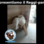 Il Reggi-panza! - Foto divertenti